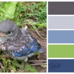 Baby Bird Color Combo