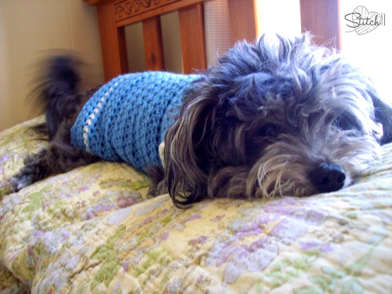 Size Small Crochet Dog Sweater - Free Pattern
