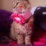Pet Cowl - Free Crochet Pattern - Review